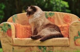 Filmtipps: Am liebsten nur noch auf der Couch liegen