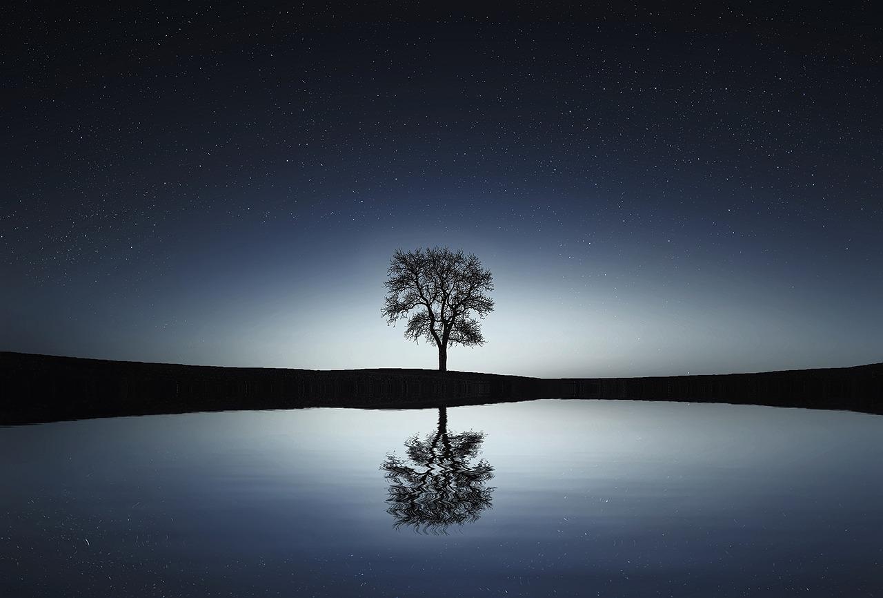 Baum unter Sternenhimmel