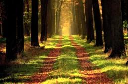 Migräne: Geheimtipp aus der Pflanzenwelt