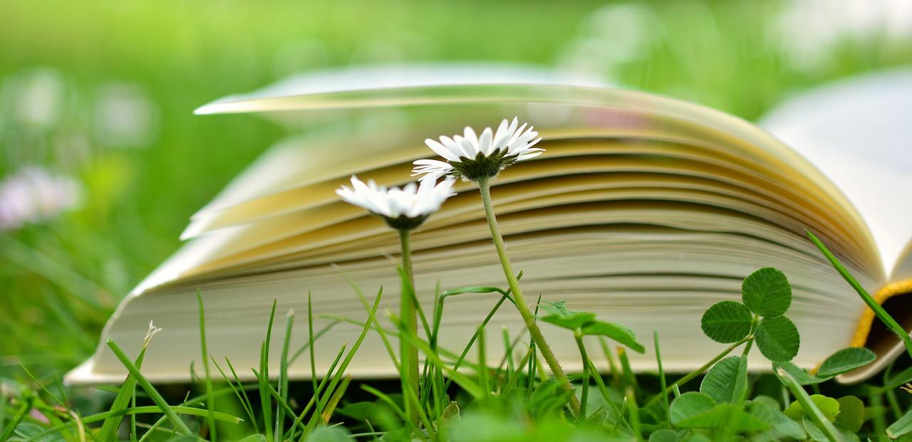 Buch im Gras